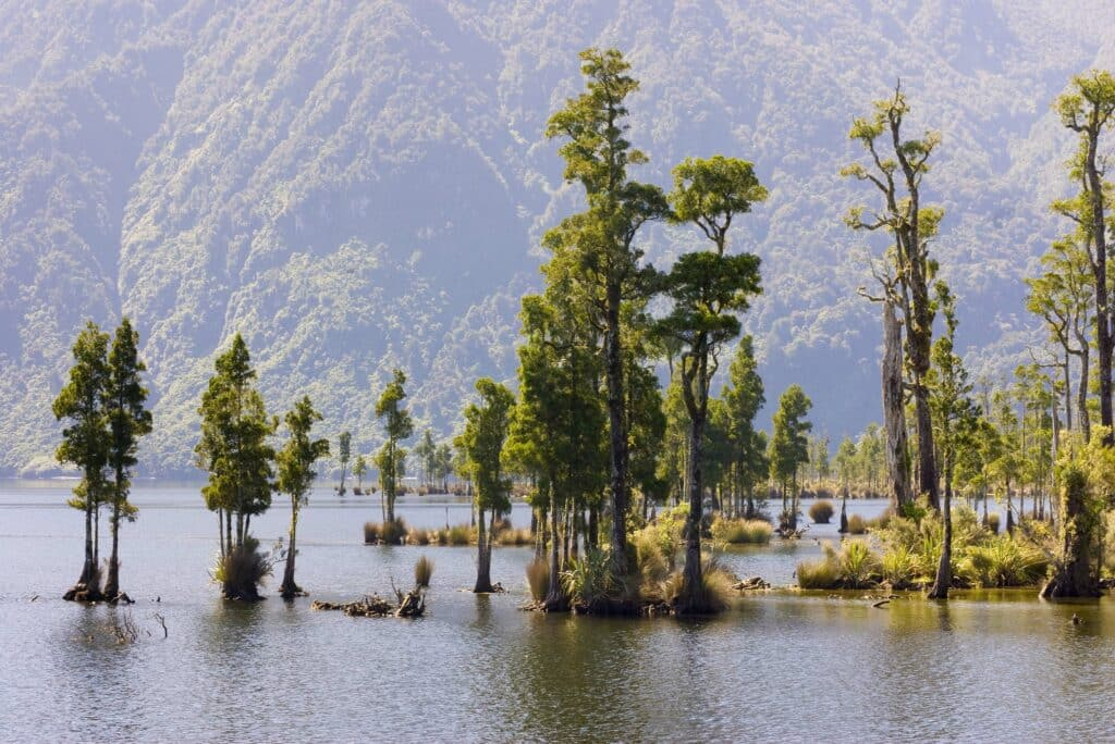 Pure Eco Painting Nelson Christchurch | Articles | Nature awakens to lock down | Trees in the swamp